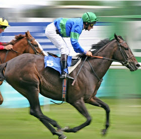 Free Horse racing betting tips