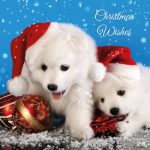 <b>Free Christmas Cards Pack</b>