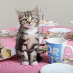 <b>Free Pet Tea Party Pack</b>