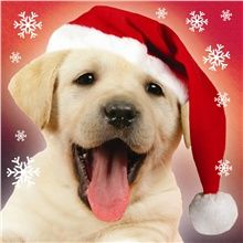 free pdsa pet christmas guide