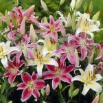 <b>Free £20 Garden Bulbs Pack</b>