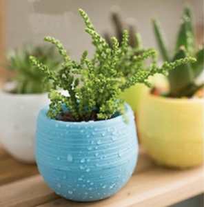 Colourful Plant Pots – 85% Off Today!