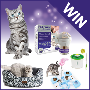 Win a Cat Bed, Water Fountain, Toy & More!