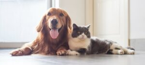 7 Amazing Animal Freebies that your Pet will Love